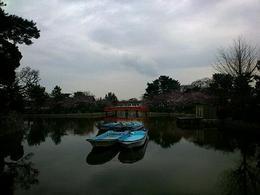 桜木3_deco.jpg