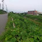 大山田川ガードレール見えない.png