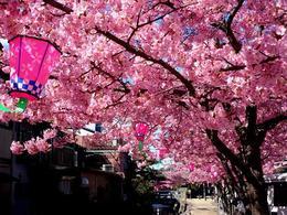 寺町3_photo.jpg