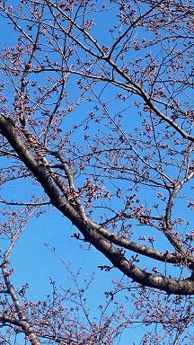 桜4526.JPG