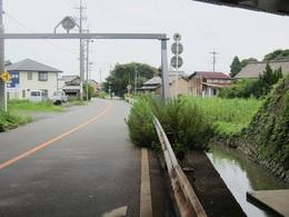 沢北川雑草 (2).JPG