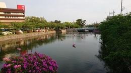 金魚祭 (1).JPG